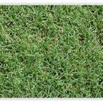 Bermuda Grass in St. Louis, Missouri